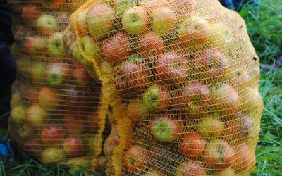 Frisches Obst für die Kindertafel